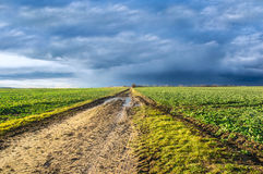 Spring road in fields before storm, landscape Stock Image