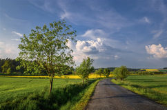 Spring road. Rural road lined with linden trees on a spring day Stock Photos