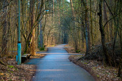 Spring road. In Vilnius park. Beautiful nature with many trees Stock Photos