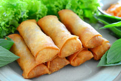Spring rolls. Crispy spring rolls on dish with vegetable Royalty Free Stock Photography