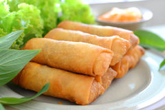 Spring rolls. Crispy spring rolls on dish with vegetable stock photo