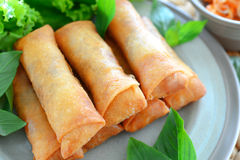 Spring rolls. Crispy spring rolls on dish with vegetable Royalty Free Stock Image