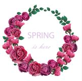 Spring Roses Flower wreath Vector realistic illustration. Fucsia color floral frame decors. Spring Roses Flower wreath Vector realistic illustration. Fucsia stock illustration