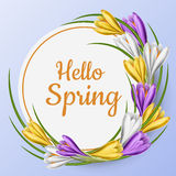 Spring round frame with colorful crocus flower. Round spring paper frame with purple, white and yellow crocus flower, green leaf and hello spring message on blue Royalty Free Stock Image