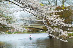Spring Rowing Stock Image