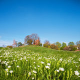 Spring in Rugen island, Germany Royalty Free Stock Image