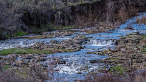 Spring Run Off Stream n the High Desert. Heavy snows in the high desert area of Central Oregon have turned this normally tiny stream into a lovely set of royalty free stock photo