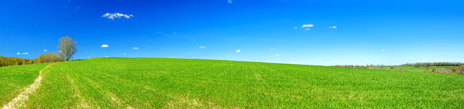 Spring rural landscape with field and blue sky, a panorama Royalty Free Stock Photography
