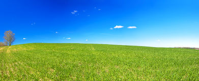Spring rural landscape with field and blue sky, a panorama Royalty Free Stock Image