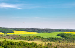 Spring rural landscape with fields, blue sky and bird Stock Photography