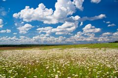 Spring rural landscape with a flowering flowers on meadow royalty free stock images