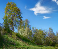 Spring rural landscape in the hills of cherry blossom and dandel Stock Photography