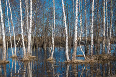 Spring in Russia Stock Photography