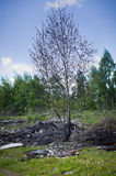Spring in the Russian forest. Stock Photo