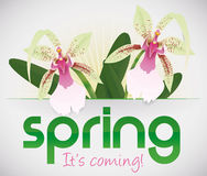Spring it's Coming and Orchids are Blooming, Vector Illustration Stock Images