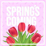 Spring`s coming!  Typographic poster design with realistic tulip. Spring is coming typographic poster Royalty Free Stock Images