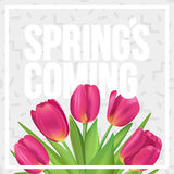 Spring`s coming. Typographic spring poster with tulips bouquet. Typographic spring poster with tulips Stock Images