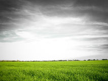 Spring's storm. Green fields under a dramatic sky Royalty Free Stock Images