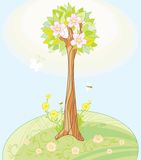 Spring's tree Stock Photos