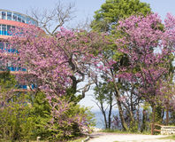 Spring in Saints Constantine and Helena resort Stock Photo