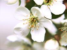 Spring sakura stock photos