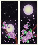 Spring sakura banners Royalty Free Stock Photography