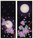 Spring sakura banners Royalty Free Stock Photography