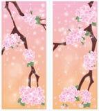 Spring sakura banners Royalty Free Stock Photo