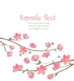 Spring sakura blossom Royalty Free Stock Image