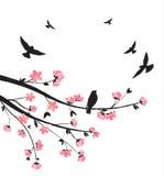 Spring sakura blossom Stock Photo