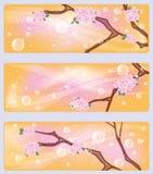 Spring sakura flowers banners Stock Photo