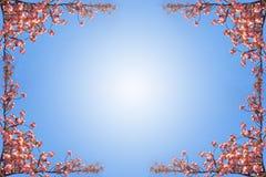 Spring sakura frame on blue sky Royalty Free Stock Image
