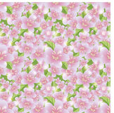 Spring sakura pattern, vector Stock Photography