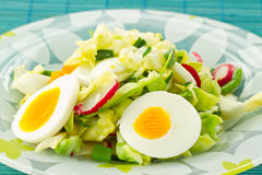 Spring salad. Of cabbage and radishes Stock Photography
