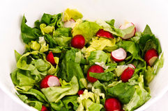 Spring Salad Stock Photo