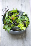 Spring salad. Fresh spring salad in bowl Stock Image