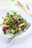 Spring salad with avocado Royalty Free Stock Photos