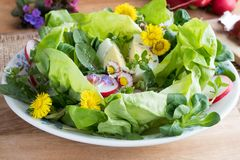 Spring salad with daisies, dandelions and other wild edible plan. Spring salad with coltsfoot, young dandelion leaves, daisies and other wild edible plants royalty free stock photo