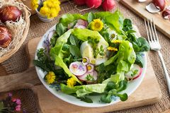 Spring salad with eggs and wild edible plants. Spring salad with dandelion leaves, chickweed, daisies and other wild edible plants stock images