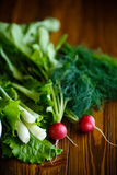 Spring salad from early vegetables, lettuce leaves, radishes and herbs Stock Photography