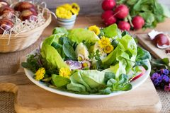 Spring salad with eggs and wild edible plants. Spring salad with lettuce, corn salad, radishes, eggs and wild edible plants - coltsfoot, daisy, lungwort flowers stock photo