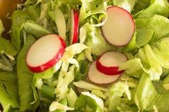 Spring salad, lettuce, radish, cabbage, onion. Spring salad of lettuce, radish, cabbage, onion Royalty Free Stock Photos
