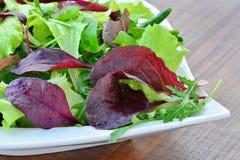 Spring salad of mixed greens closeup Stock Images