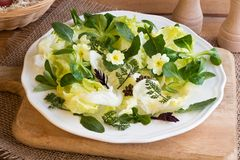 Spring salad with primula, nipplewort and other wild edible plan. Spring salad with primula flowers, young nipplewort leaves and other wild edible plants royalty free stock photo