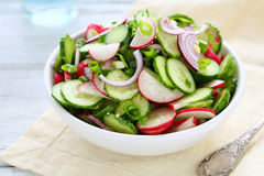 Spring salad with radish in bowl royalty free stock image