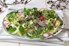 Spring salad with radishes and broccoli and kale microgreens on a white background royalty free stock photo