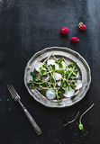 Spring salad with sunflower sprouts and radish Royalty Free Stock Images