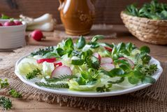 Spring salad with wild chickweed, bedstraw and yarrow stock photography