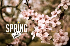Spring sale Background with cherry blossoms. Royalty free stock photo illustration for greeting card, ad, promotion, poster, flier, blog, article, social media Stock Image