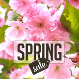Spring sale Background with cherry blossoms. Royalty free stock photo illustration for greeting card, ad, promotion, poster, flier, blog, article, social media Royalty Free Stock Images